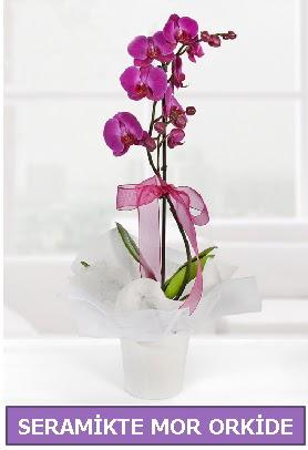 Seramik içerisinde birinci kalite tek dallı mor orkide  İstanbul Kadıköy İnternetten çiçek siparişi