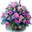 karisik mevsim kir çiçekleri  İstanbul Kadıköy çiçek gönderme sitemiz güvenlidir