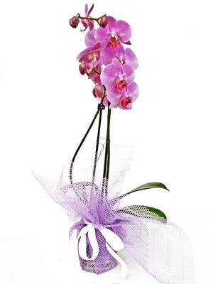 İstanbul Kadıköy anneler günü çiçek yolla  Kaliteli ithal saksida orkide