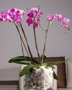 İstanbul Kadıköy çiçek siparişi sitesi  2 dal orkide cam yada mika vazo içerisinde