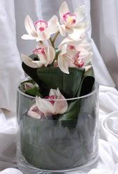 İstanbul Kadıköy internetten çiçek siparişi  Cam yada mika vazo içerisinde tek dal orkide