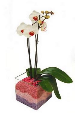 İstanbul Kadıköy uluslararası çiçek gönderme  tek dal cam yada mika vazo içerisinde orkide