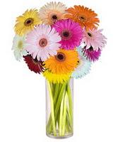 İstanbul Kadıköy internetten çiçek siparişi  Farkli renklerde 15 adet gerbera çiçegi