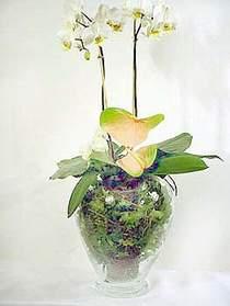 İstanbul Kadıköy çiçek satışı  Cam yada mika vazoda özel orkideler