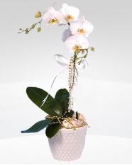 1 dallı orkide saksı çiçeği  İstanbul Kadıköy online çiçekçi , çiçek siparişi