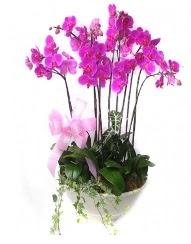9 dal orkide saksı çiçeği  İstanbul Kadıköy güvenli kaliteli hızlı çiçek