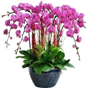 9 dallı mor orkide  İstanbul Kadıköy 14 şubat sevgililer günü çiçek