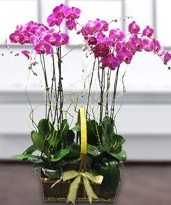 4 dallı mor orkide  İstanbul Kadıköy güvenli kaliteli hızlı çiçek