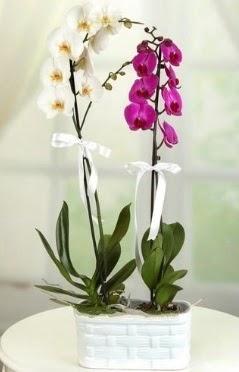 1 mor 1 dal beyaz İthal orkide sepet içerisinde  İstanbul Kadıköy çiçek mağazası , çiçekçi adresleri