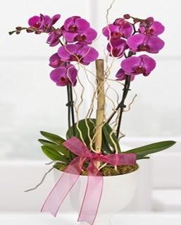 2 dallı nmor orkide  İstanbul Kadıköy anneler günü çiçek yolla