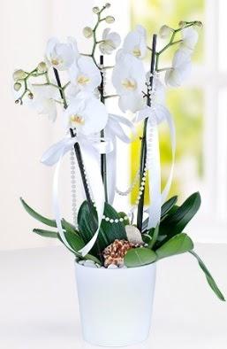 3 dallı beyaz orkide  İstanbul Kadıköy çiçek yolla