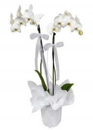2 dallı beyaz orkide  İstanbul Kadıköy güvenli kaliteli hızlı çiçek