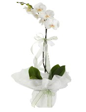 1 dal beyaz orkide çiçeği  İstanbul Kadıköy çiçek siparişi vermek