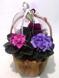Sepet içerisinde 3 adet menekşe  İstanbul Kadıköy anneler günü çiçek yolla