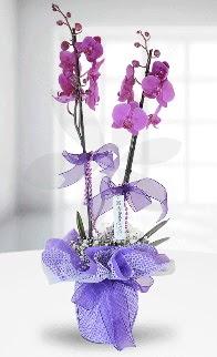 Çift dallı mor orkide LİKE MARKADIR  İstanbul Kadıköy anneler günü çiçek yolla
