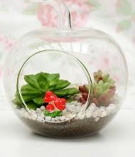 Küçük elma terrarium 3 kaktüs  İstanbul Kadıköy online çiçek gönderme sipariş