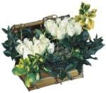 İstanbul Kadıköy online çiçek gönderme sipariş  Ahsap sandik beyaz güller