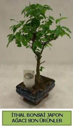 İthal bonsai japon ağacı bitkisi  İstanbul Kadıköy hediye sevgilime hediye çiçek