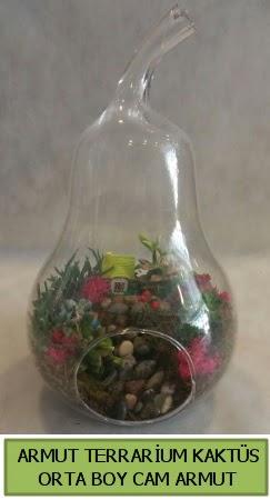 Cam Armut terrarium 5 kaktüs  İstanbul Kadıköy çiçek gönderme