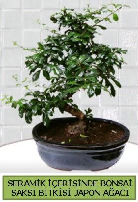Seramik vazoda bonsai japon ağacı bitkisi  İstanbul Kadıköy çiçek siparişi sitesi