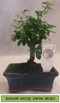 Minyatür bonsai ağacı satışı  İstanbul Kadıköy çiçek gönderme