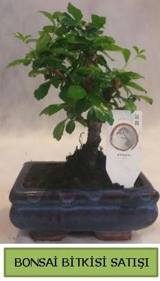 Bonsai ithal görsel minyatür japon ağacı  İstanbul Kadıköy ucuz çiçek gönder
