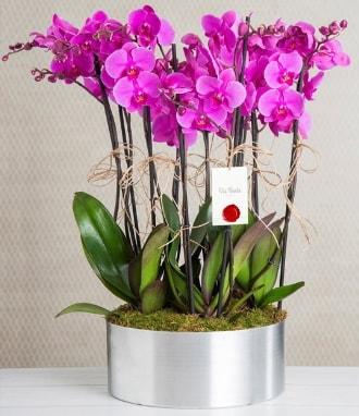 11 dallı mor orkide metal vazoda  İstanbul Kadıköy çiçek gönderme sitemiz güvenlidir