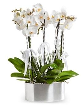 Beş dallı metal saksıda beyaz orkide  İstanbul Kadıköy çiçek yolla