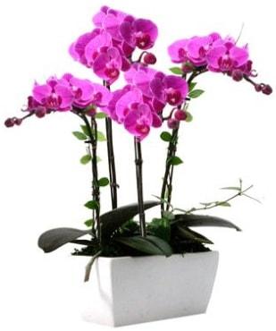 Seramik vazo içerisinde 4 dallı mor orkide  İstanbul Kadıköy çiçek satışı
