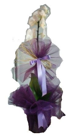Tek dallı beyaz orkide süper kalite ithal  İstanbul Kadıköy çiçek siparişi sitesi