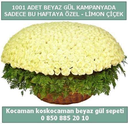 1001 adet beyaz gül sepeti özel kampanyada  İstanbul Kadıköy çiçek gönderme sitemiz güvenlidir