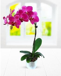 Tek dallı mor orkide  İstanbul Kadıköy çiçek satışı