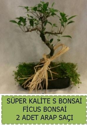 Ficus S Bonsai ve arap saçı  İstanbul Kadıköy çiçekçi telefonları