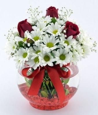 Fanusta 3 Gül ve Papatya  İstanbul Kadıköy internetten çiçek satışı