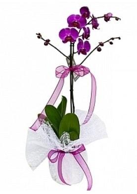 Tekli Mor Orkide  İstanbul Kadıköy çiçek yolla
