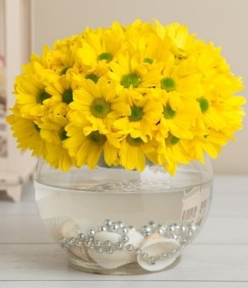 Fanusta Sarı Papatya  İstanbul Kadıköy çiçek siparişi sitesi