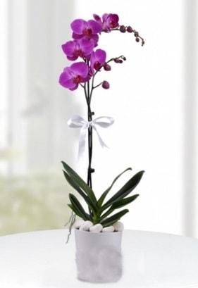 Tek dallı saksıda mor orkide çiçeği  İstanbul Kadıköy çiçekçiler