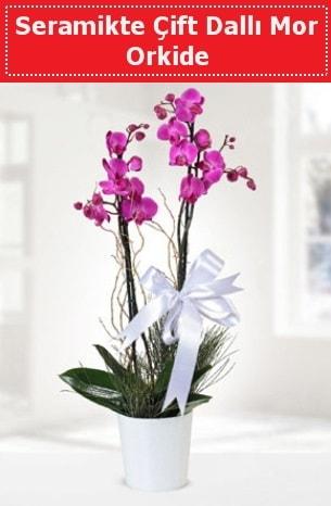 Seramikte Çift Dallı Mor Orkide  İstanbul Kadıköy anneler günü çiçek yolla
