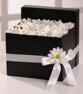Kutuda beyaz krizantem papatya çiçekleri  İstanbul Kadıköy çiçek siparişi sitesi