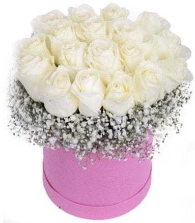Renkli kutuda 19 adet beyaz gül  İstanbul Kadıköy internetten çiçek satışı