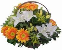 İstanbul Kadıköy online çiçekçi , çiçek siparişi  sepet modeli Gerbera kazablanka sepet